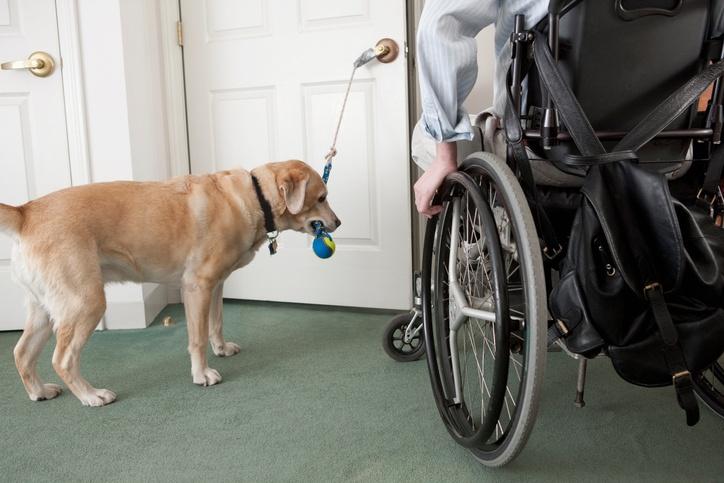 service_dog_opening_door.jpg